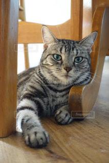 猫の写真・画像素材[655640]