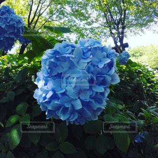 花の写真・画像素材[660258]