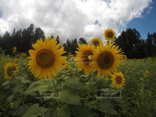 夏の写真・画像素材[681602]
