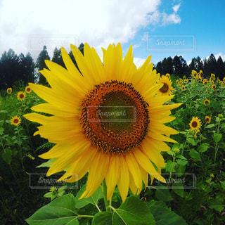 夏の写真・画像素材[681603]