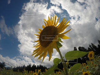 夏の写真・画像素材[681606]
