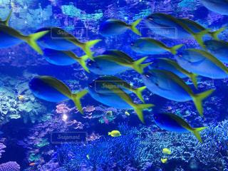 魚の写真・画像素材[644846]