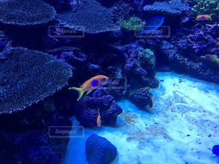 魚の写真・画像素材[645135]
