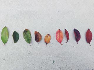 植物の写真・画像素材[645013]