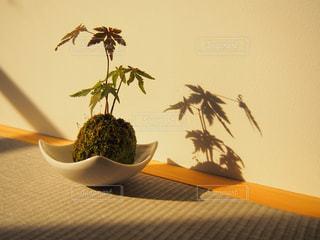 植物の写真・画像素材[648327]