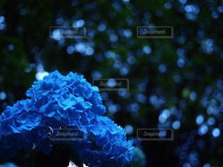花の写真・画像素材[654034]
