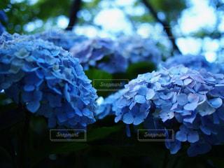 花の写真・画像素材[654036]