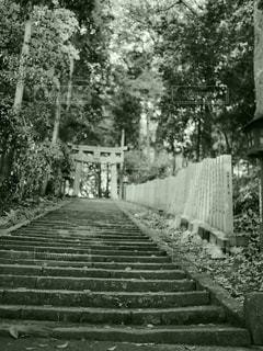 木の黒と白の写真の写真・画像素材[762288]