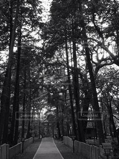 フォレスト内のツリーの写真・画像素材[762289]