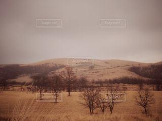 草原の写真・画像素材[781081]