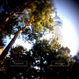 自然の写真・画像素材[647374]