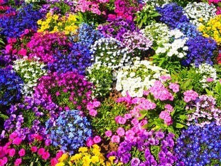 花の写真・画像素材[87256]