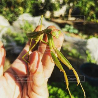 昆虫採集の写真・画像素材[646343]