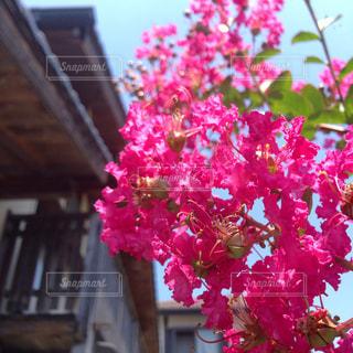 花の写真・画像素材[646344]