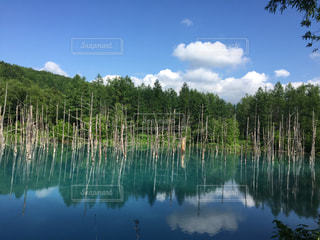 北海道 美瑛 青い池 絶景の写真・画像素材[646586]