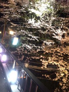桜 - No.646697