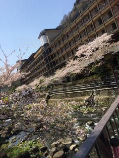 桜 - No.646699