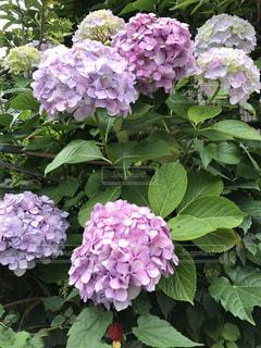花の写真・画像素材[648285]
