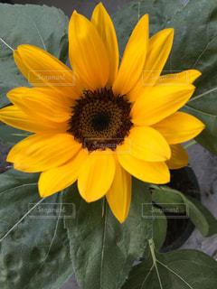 花の写真・画像素材[653251]