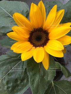 花の写真・画像素材[653252]