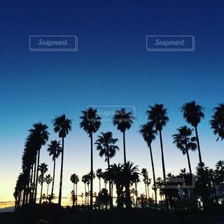 椰子の木 - No.647058