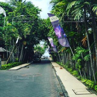 バリ島の写真・画像素材[647098]