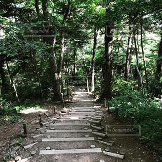 高尾山探検の写真・画像素材[1117576]