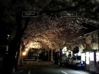 夜の桜 通り道の写真・画像素材[1117609]