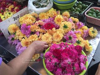 花の写真・画像素材[647291]