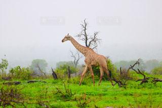 動物 - No.670253