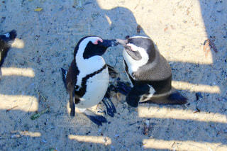ペンギンの上に座っている黒い鳥 - No.984130