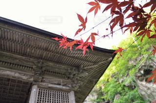 秋の写真・画像素材[700064]