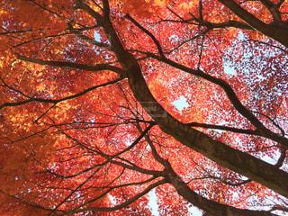 秋の写真・画像素材[700065]