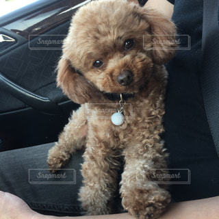 車の座席に座っている犬 - No.720939