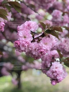 近くの植物にピンクの花のアップの写真・画像素材[1130933]