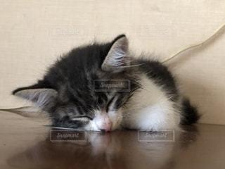 昼寝中の猫の写真・画像素材[2489851]