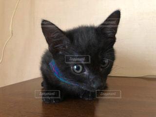黒猫ちゃんの写真・画像素材[2490871]