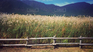 山の前にあるベンチの写真・画像素材[717312]