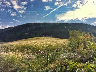 仙石原のすすき野原の写真・画像素材[750218]