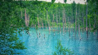 青い池 - No.910618