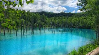 青い池の写真・画像素材[910620]