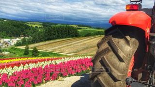 お花畑をトラクターバスでの写真・画像素材[912226]