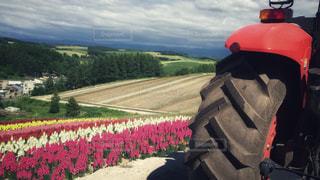 トラクターバスでお花畑一周の写真・画像素材[912227]