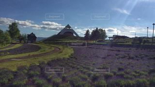 光がさしこむラベンダー畑の写真・画像素材[912416]