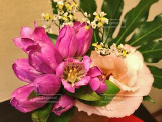 花の写真・画像素材[961179]