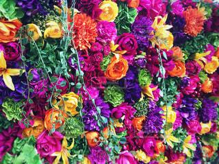 花の壁の写真・画像素材[966219]