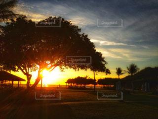 ボルネオ島の夕陽の写真・画像素材[986528]