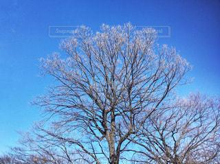 近くの木のアップの写真・画像素材[1001465]