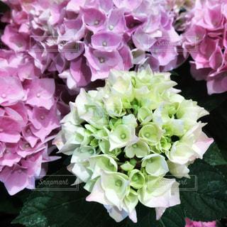 近くに紫の花のアップの写真・画像素材[1165371]