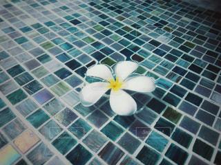 プールに浮かぶプルメリアの写真・画像素材[1201721]